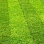 Landscaping Maintenance Tips for Your Lawn